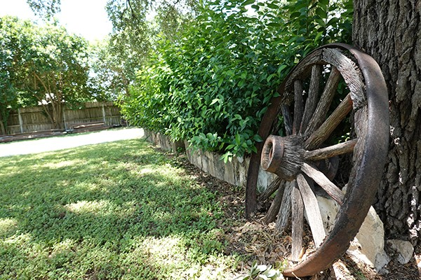 old wagon wheel leaning on tree with green shrubs in Bryn Oaks back yard